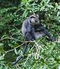 Tanz_wildlife175