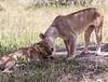 Tanz_wildlife159
