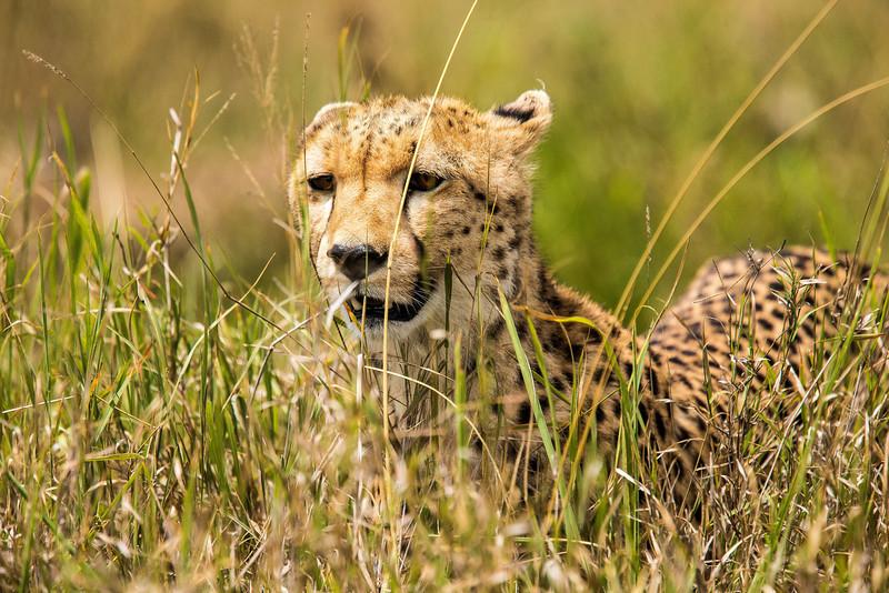 Tanz_wildlife071