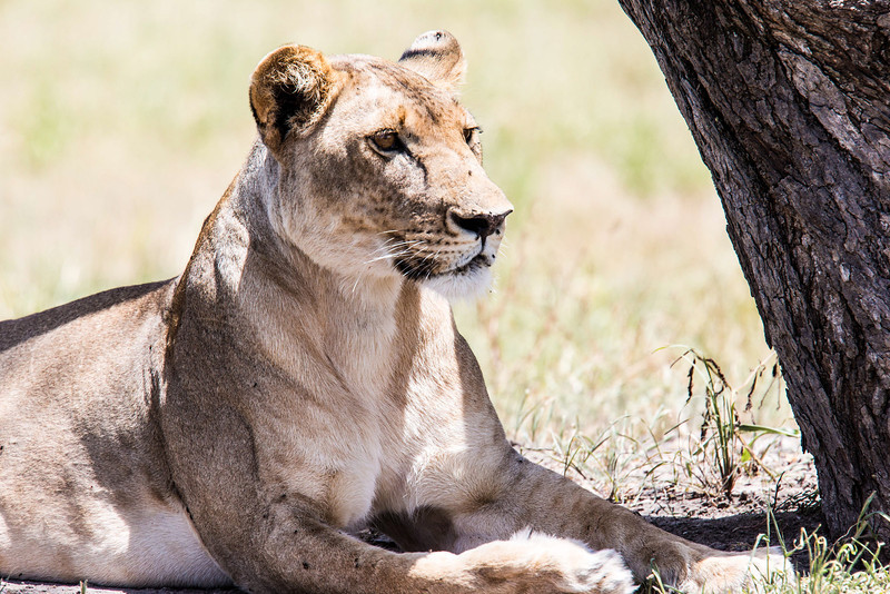Tanz_wildlife156