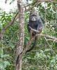 Tanz_wildlife173
