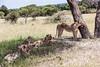 Tanz_wildlife158