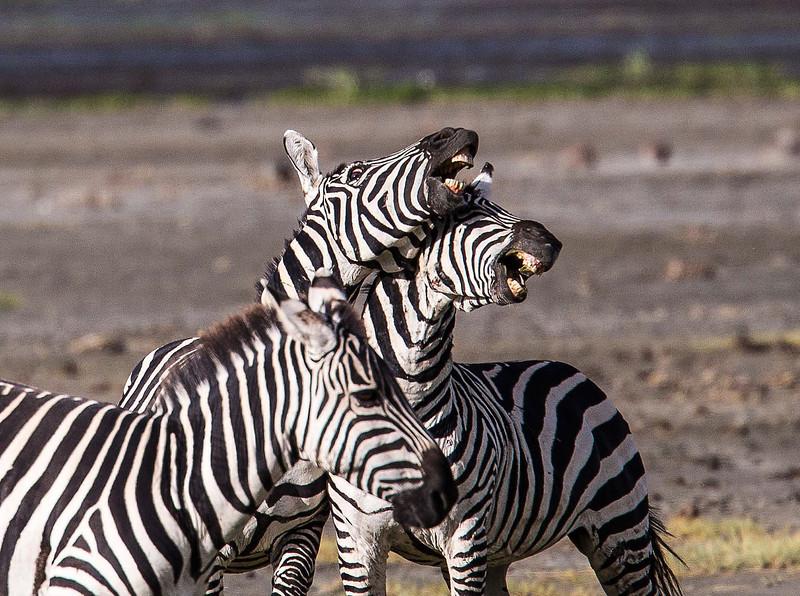 Tanz_wildlife105