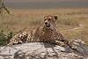 Cheeta 3