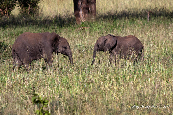 Elephant 154<br /> Two baby elephants talking to each other.
