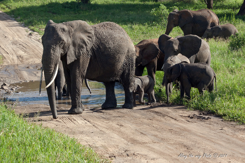Elephant 138<br /> Elephants down at water holes in Serengeti