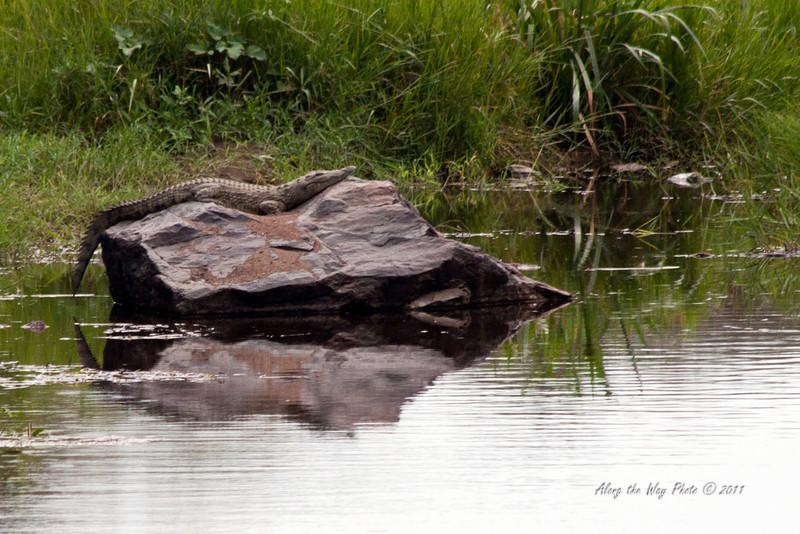 Crocodile 2<br /> Crocodile sunning himself on a large rock.