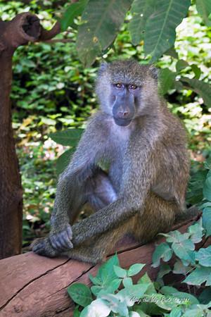 Monkeys-61