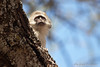 Monkeys-23<br /> 1 young Vervet Monkey in Tanzania.