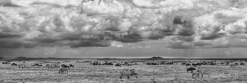 At the Serengeti_ BW