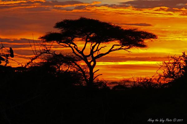 Sunset1683-5<br /> Sunset at Lake Masek in the Serengeti.