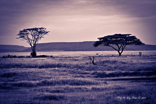 Scenery 105<br /> Trees on the Serengeti