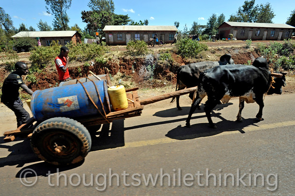liquid transport by oxen