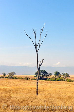 A kite lookout tree.
