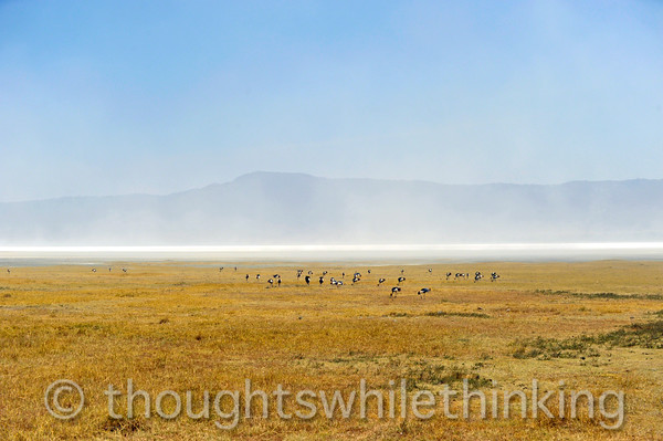 A flock of grey crowned cranes near Lake Magadi, or Makati in Maasai, in the background.