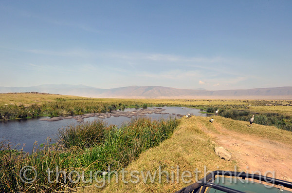 The famous Ngorongoro Crater hippo pool. Lots of birds and mammals in this area.