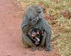supply your own caption for this mom and baby; is she reconsidering the benefits of motherhood?
