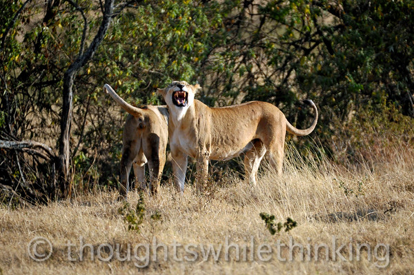 """Mom gives the """"all clear"""" to her cubs, who, along with Aunt Ruth, come running over to join the group."""