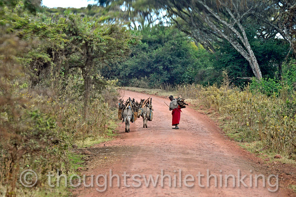 On the drive back to camp we encountered a Maasai woman with donkeys carrying firewood.