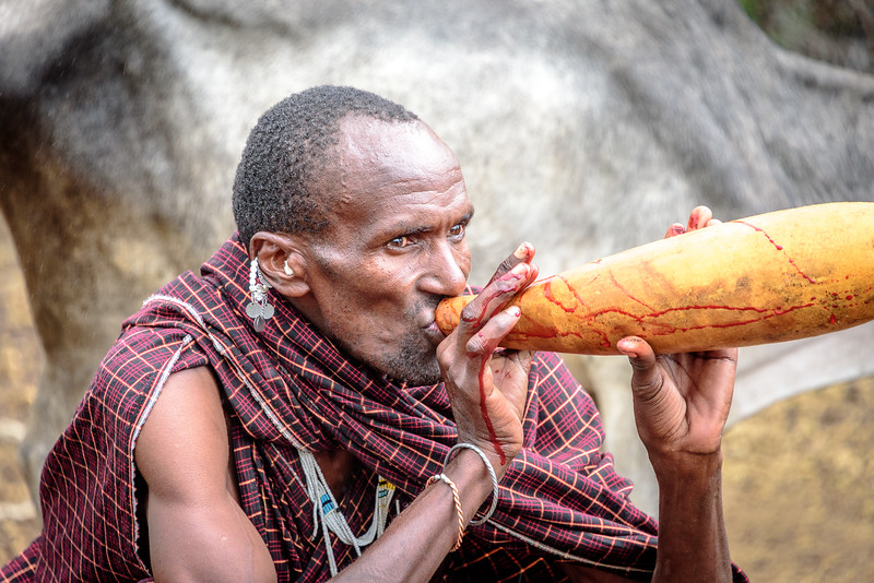 Blood and milk are normal staples of the Maasai diet