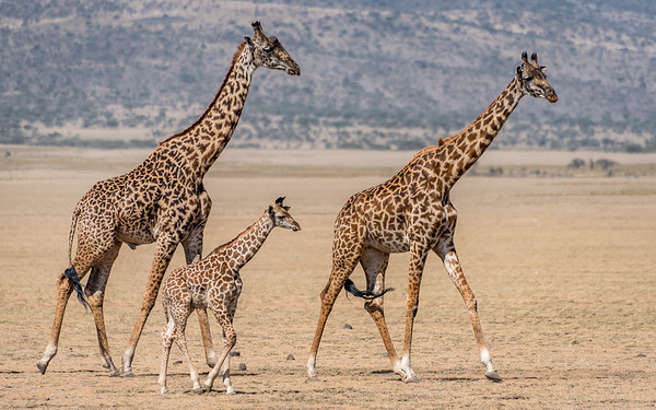 3. Ngorongoro Highlands & Oldupai Gorge