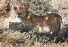 Tanzania 2007