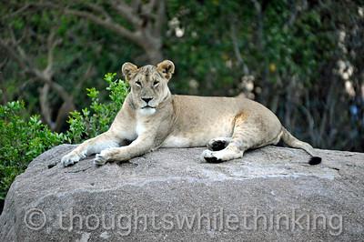 Tanzania 2014 Serengeti Mara 1st afternoon