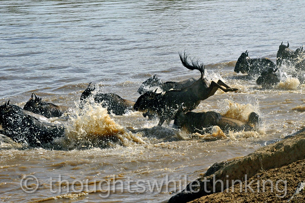 One second later  : No style points, but it looks like this wildebeest is having fun!