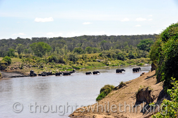 Just to keep things interesting, a herd of elephants go in reverse. My guess is that they regularly wade from one side of the river to the other to cool off and to find better grazing.