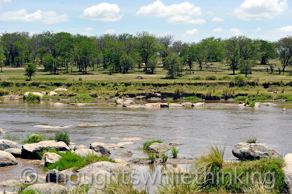 Typical Mara River scene. See the center of this photo in the next shot.