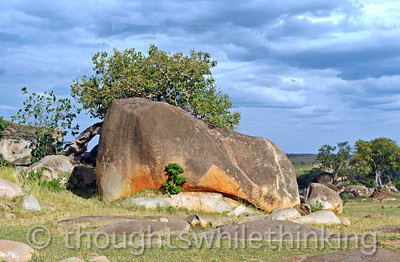 Tanzania 2014 Serengeti Mara Day 1B