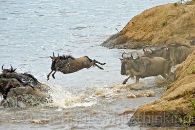 Tanzania 2014 Serengeti Mara Day 2A