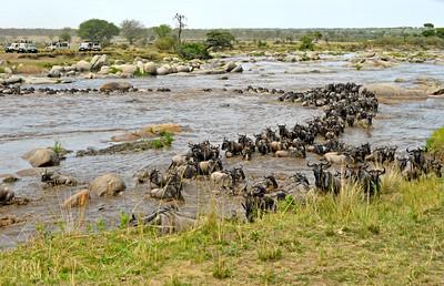 Tanzania 2014 Serengeti Mara Day 2B