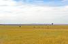 Elephants on the Serengeti plains.