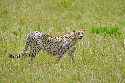 Tanzania 2014 Serengeti Mara Day 2C