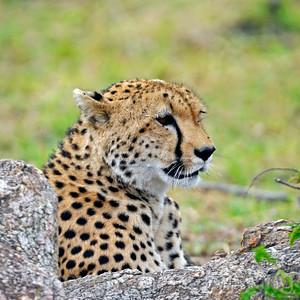 Tanzania 2014 Serengeti Mara Day 3