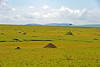 Mara River Serengeti savanna - termite mounds, a creek cut and a lone acacia tree.