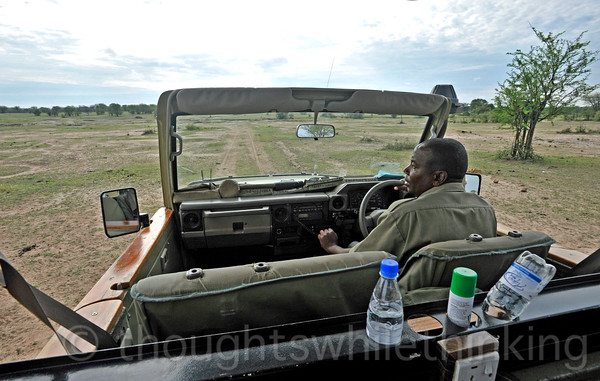 Albert analyzing the distant Wildebeest and other animals in anticipation of another crossing.