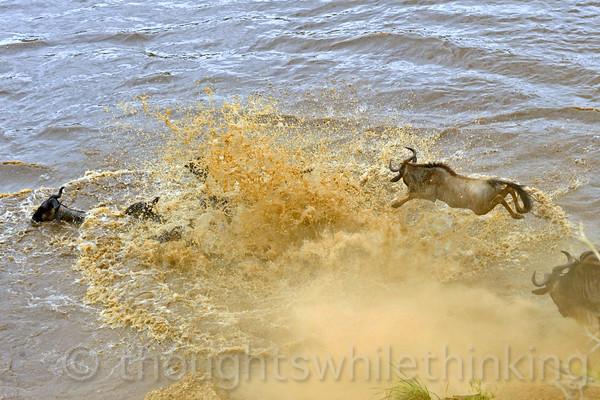 Tanzania 2014 Serengeti Mara Day 4