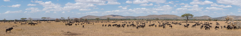 The great migration in June