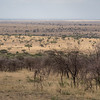 View of the Serengeti from camp