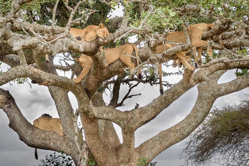 Grab a branch!