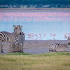 Zebras and flamingos along the shore of Lake Burungi