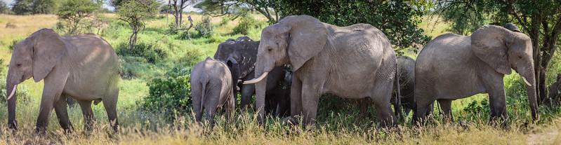 Family of elephants enjoying the shade