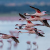 Flamingos over Lake Burungi