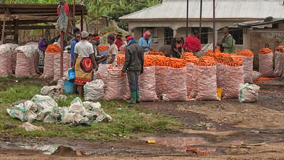 A Carrot Market