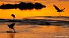 Carroñeras en el río Mara