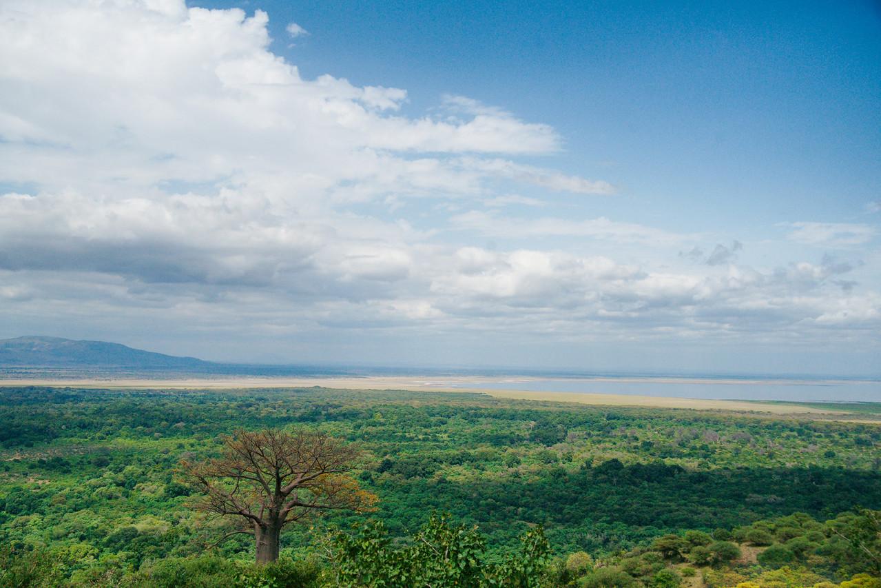 Lone Baobab, Lake Manyara, Tanzania