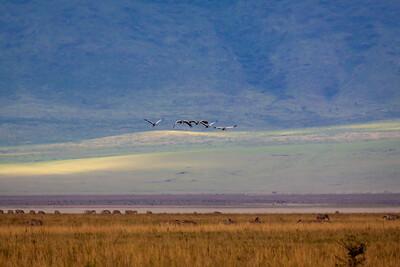 Ngorongoro Crater, Tanzania (2008)