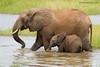 Bañándose en Silale Swamp (río NG'Osuwa) Tarangire